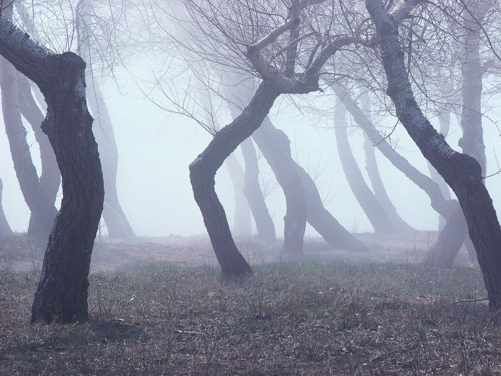 Free download early morning fog wallpapers